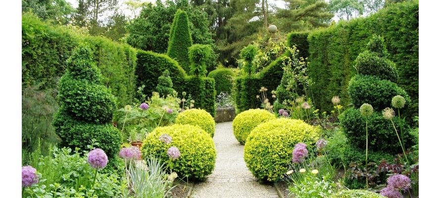 Кращі рослини для саду