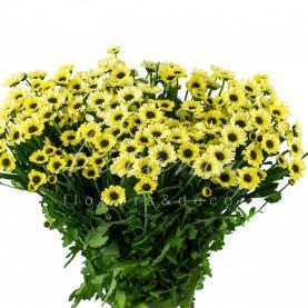 Хризантема сантіні Yin Yange Creame 55см