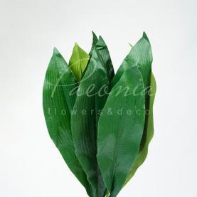Квітка штучна Листя аспідастра 90см