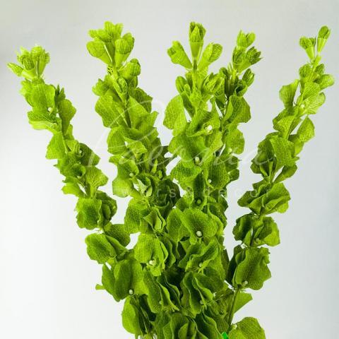 Цветок искусственный Молюселла 80см