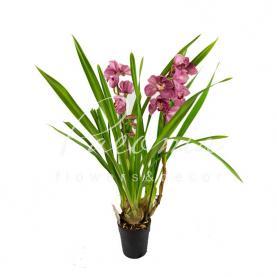 Цимбідіум (орхідея) 14 * 90 темно-ліловий