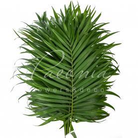 Чіко (листя пальми) 50см (ціна за 1 пучок)