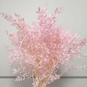 Рускус стабілізований ніжно-рожевий 65см (ціна за 1 пучок)