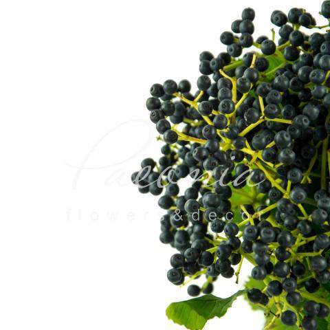 Вібурнум Dark Blue з ягодами 70см