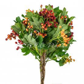 Вибурнум Opulus Compactum с ягодами 30-40см