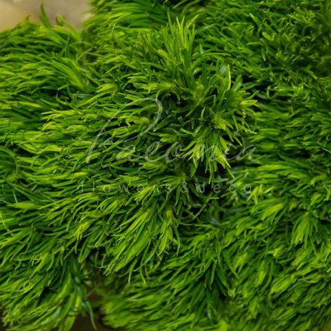 Гвоздика Barbatus Aldo Green 55см