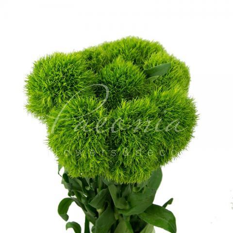 Гвоздика Green Ball 40см