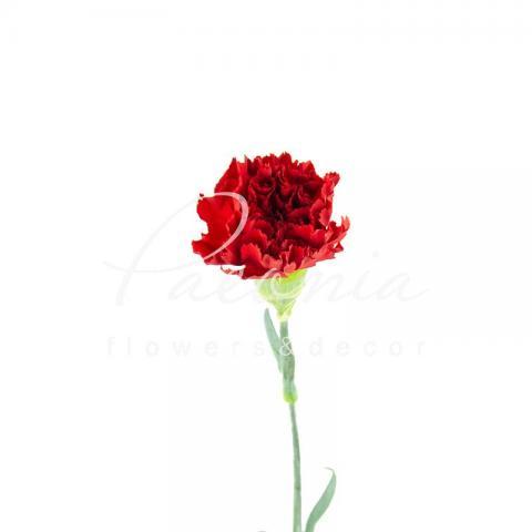 Гвоздика Don Pedro червона 65см