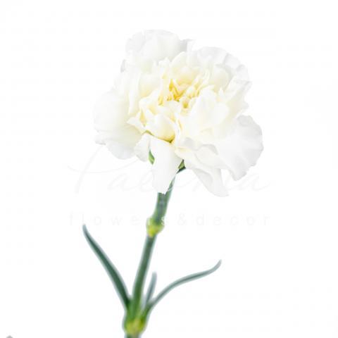 Гвоздика Everest біла 65см