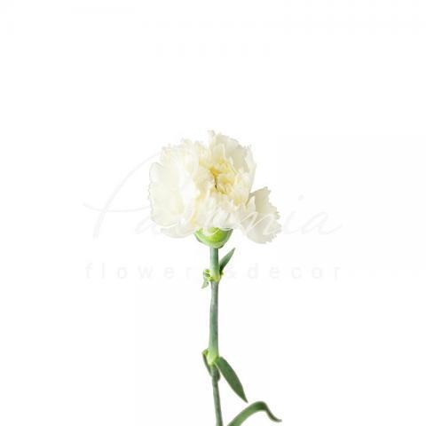 Гвоздика Holly біла 60см
