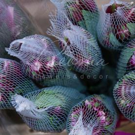 Альстромерія Stratus ніжно-фіолетова 70см