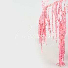 Амарантус Hanging фарбований рожева (ціна за 1 пучок)