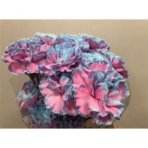 Гвоздика фарбована Bubblegum 60см
