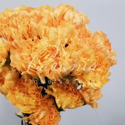 Гвоздика персикова 70см