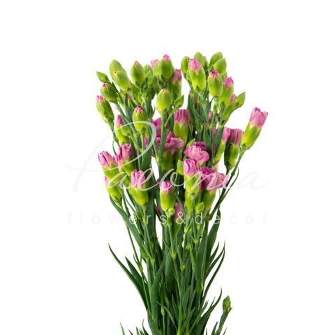 Гвоздика спрей рожева 50см