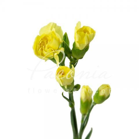 Гвоздика спрей жовта 45см
