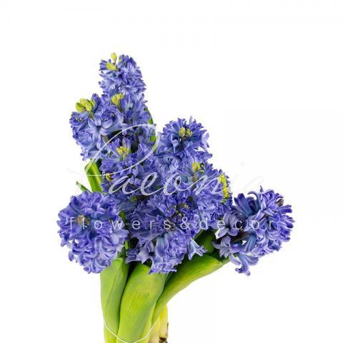 Гіацинт Delft Blue блакитний 30см