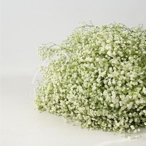 Гіпсофіла Xlence біла 80см