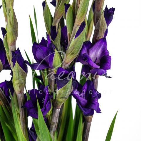 Гладіолус Milka фіолетовий 110см