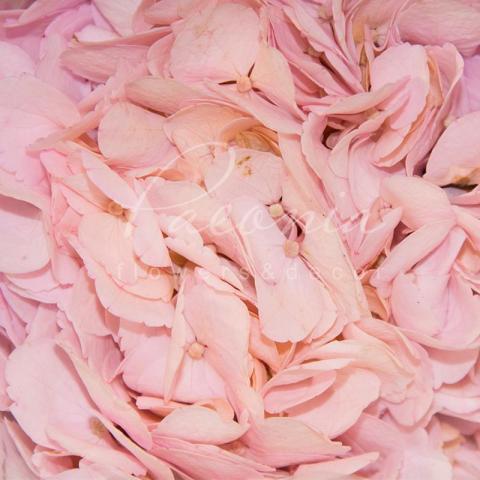 Гортензія Light Pink 60см Ø20см