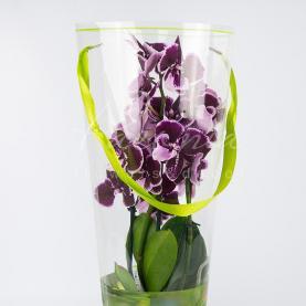 Коробка для орхідей прозора тубус зелена 52см*20см*12см