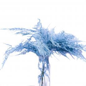 Аспарагус фарбований світло блакитний 45см (ціна за 1 пучок)