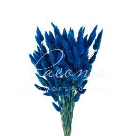 Сухоцвіт лагурус темно-синій