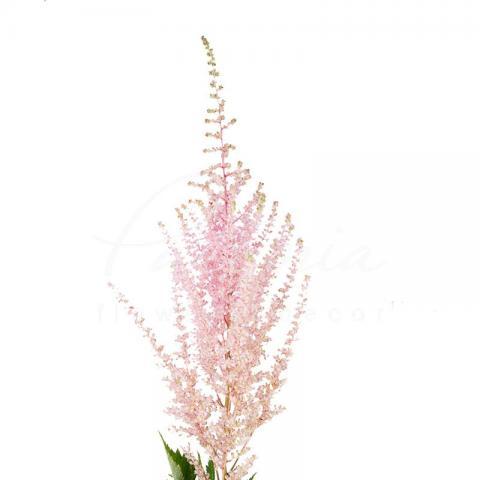 Астільба Erika рожева 55см