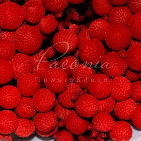 Брунія фарбована червона 40см (ціна за 1 гілку)