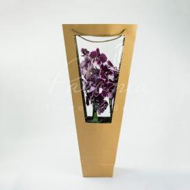 Пакет Флористичний для орхідей 11*11*60см з прозорим прямокутним віконцем крафтовий