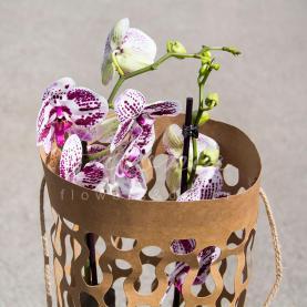 Пакет флористический для орхидей 70*20*12см с перфорацией крафтовый