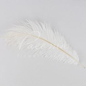 Перо страусине декоративне біле 25-30 см
