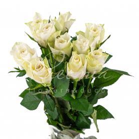 Троянда Athena 40см