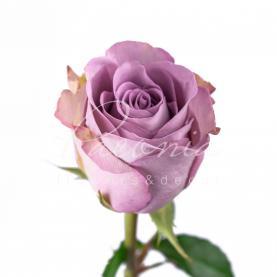 Троянда Memory Lane 40см