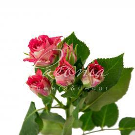 Троянда спрей Fireworks 40см