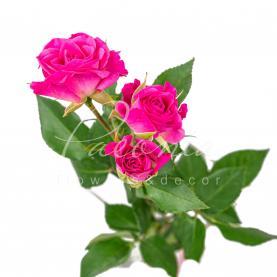 Троянда спрей Lianne 40см