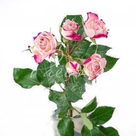 Троянда спрей Reflex 40см