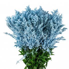 Солідаго фарбоване ніжно-блакитне 50см