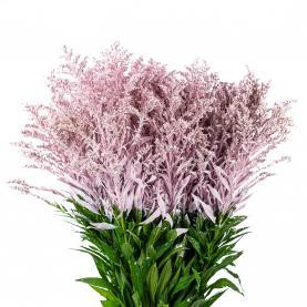 Солідаго фарбоване ніжно-рожеве 50см