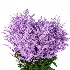 Солідаго фарбоване ніжно-фіолетове 50см