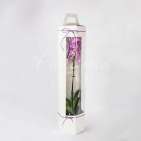 Сумочка Флористична з картону 170*195*750мм з прозорим дисплеем для орхідей білий