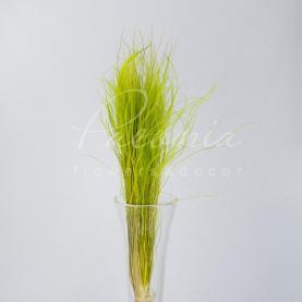 Сухоцвіт Ковила зелений А-2
