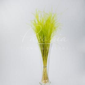 Сухоцвіт Ковила зелений маленький пучок