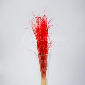 Сухоцвіт Ковила червоний А-2