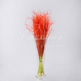 Сухоцвіт Ковила помаранчевый маленький пучок
