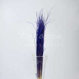 Сухоцвіт Ковила фіолетовий А-2