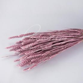 Сухоцвіт колосок пшениці рожевий