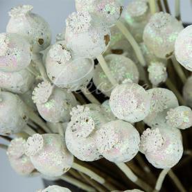 Сухоцвіт коробочки мака висота 50см білий з блиском