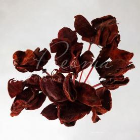 Сухоцвіт лотос висота 50см пелюстки червоний