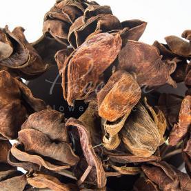 Сухоцвіт лотос висота 50см пелюстки натуральний